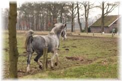 verschil pony paard